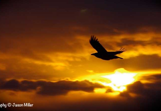 """Iqaluit, """"Early Morning Raven""""   Baffin Photography"""